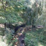 Корабельные леса Таганрога