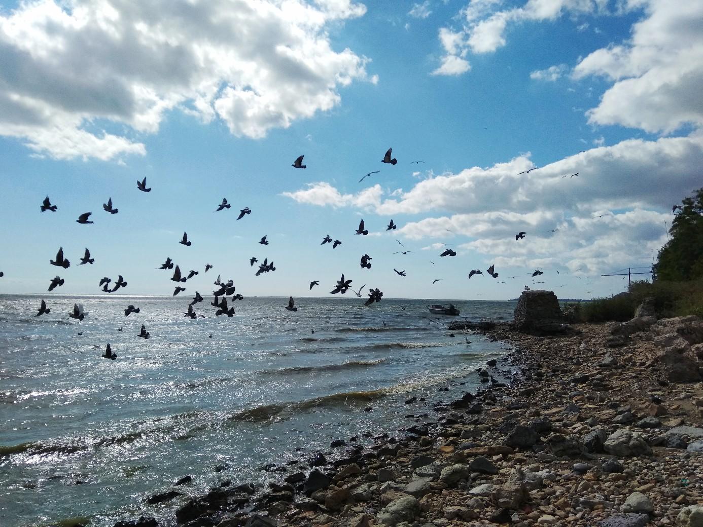 голуби над морем