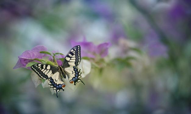 Мы – «бабочки»